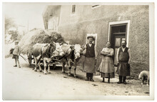 Vintage Photo Farmer Family Cows Country Life Style