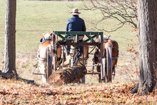 Amish Logger With Horses And Cart Hauling Trees In The Autumn