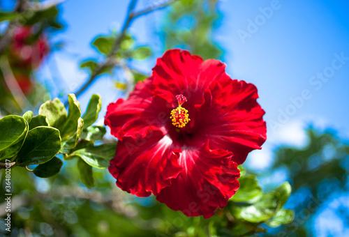 Fotografia, Obraz hibiscus