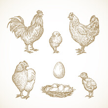 Vector Poultry Birds Sketches ...