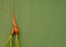 Ugly Carrots On A Green Wooden...