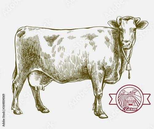Fotografie, Obraz breeding cow