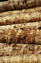 Side View Of Cut Tree Trunks Stacked In Pile. Bark Stripped Off.  Lumber Yard Kirchbach Austria