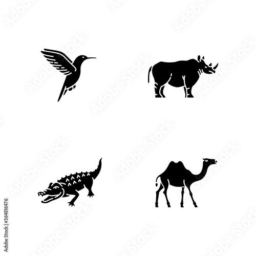 Fotografija Exotic animals black glyph icons set on white space
