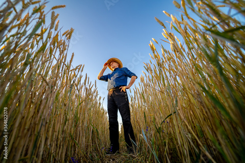 Obraz Selective focus on man standing in rape wheat field. Harvest season. - fototapety do salonu