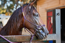Portrait Of Horse In Corral