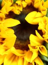 Sunflower On Black Background