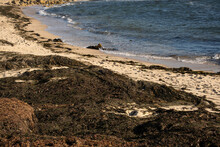 Beach Covered In Thick Piles O...