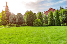Freshly Cut Grass In The Backyard Of A Private House.