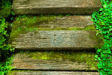 Top View Of Wooden Footpath, M...