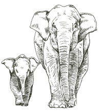 Hand Drawn Sketch Of Elephant Mother And Cub Walking,  Front View