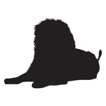 Silhouette Of Sitting Lion