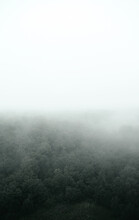 The Forest Is In The Fog