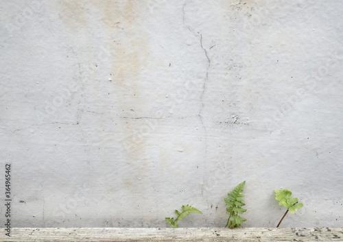 Tablou Canvas 外壁のスキマに生える小さな雑草