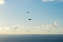 Two Seagulls Flying Over The S...