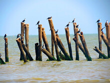Pier Poles Into The Sea With R...