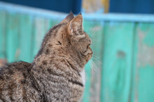 The Tabby Brown Cat Turned Away