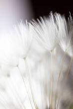 Abstract Macro Photo, White Da...