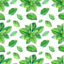 Seamless Patterns, Mint Leaves And Branches, Watercolor Painting, On Isolated Background