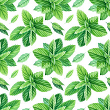 Seamless Patterns. Peppermint Watercolor Painting, On Isolated Background