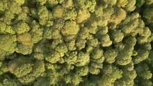 Aerial Drone Footage Above The Forest At Brandelhow Park Near Derwentwater, Derwent, The Lake District, Cumbria, United Kingdom 4K