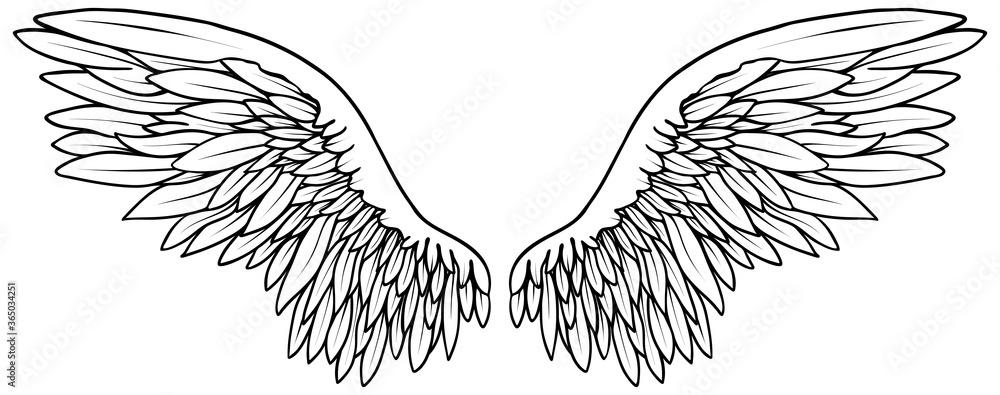 Fototapeta Основные RBeautiful black and white hand drawn vector wings