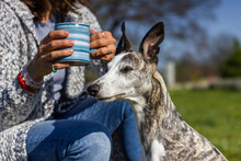 Woman Enjoying Cup Of  Coffee With Her Whippet Dog. Relaxation Outdoors