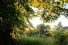Sunlight Through The Trees On ...