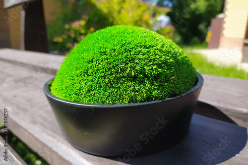 decorative green moss tussock in a black flower pot Canvas-taulu