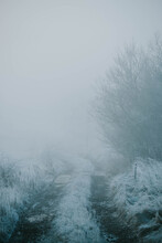 Country Road On Foggy Winter M...