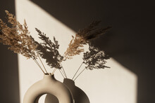 Dry Pampas Grass / Reed In Stylish Vase. Shadows On The Wall. Silhouette In Sun Light