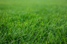 Green Lawn With Fresh Grass As...