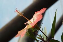 Hibiscus Profile