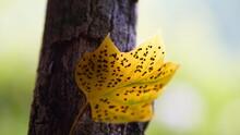 Yellow Leave
