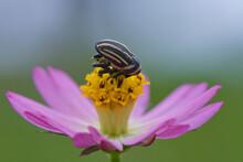 Wefeel On Flower