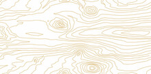 Seamless Wooden Pattern. Wood Grain Texture. Dense Lines. Abstract White Background. Raster Copy