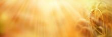 Ripe Wheat Ears With Golden Su...