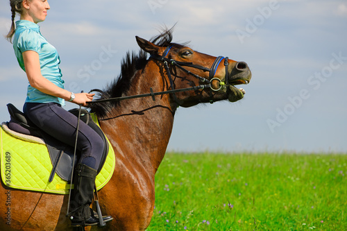 Fototapeta The Caucasian horsewoman and her bay naughty horse are in outdoors. obraz