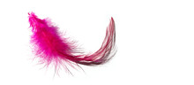 Pink Feathers On A White Background, Abstract Background, Fantasy, Abstraction, Soft Color Art Design, Creative, Roaring 20