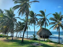 Beach In Barbados With Huge Rock Boulder In Sea, Tall Palm Trees, Waves, Blue Sky And Green Grass (Bathsheba, Barbados East Coast, Caribbean) - Atlantic Ocean Side