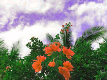 Red Bougainvillea Flowers Against The Background Of A Clear Cloudy Sky. Art Effect Of Blur Posterization Shading.