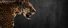 Jaguar On Horizontal Grey Wall Background