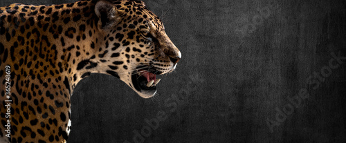 Papel de parede jaguar on horizontal grey wall background