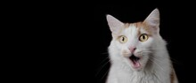 Funny Tabby Cat Looking Surprised With Mouth Open. Panoramic Image With Copy Space.