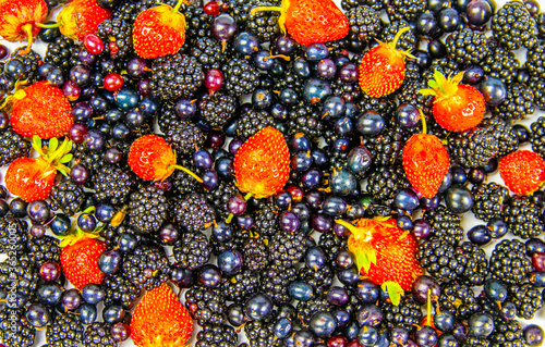 Mix of berries Canvas Print