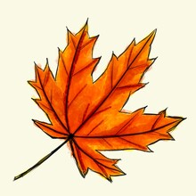 Digital Sketch Maple Leaf. Black Doodle Outline And Orange And Red Colored Foliage Isolated On White. Watercolor Imitation Bright Dark And Light Colors With Stains. Natural Product