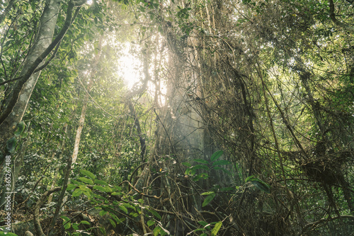 Sunlight Streaming Through Trees In Forest - 365267488