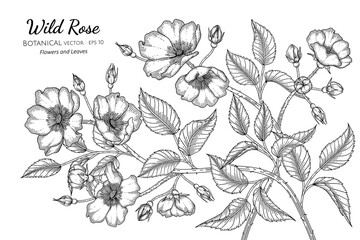 Wild rose flower and leaf hand drawn botanical illustration with line art on white backgrounds.