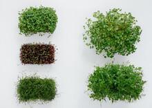 Several Sudochki Sprouts Micro...