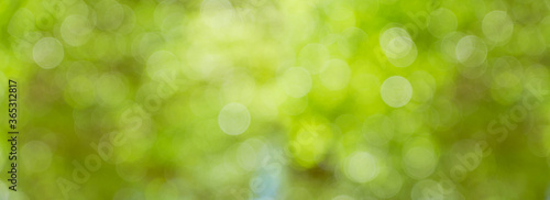 bokeh greenery background of tree leaves Canvas